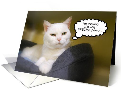 White Cat Friend Birthday Humor card #HappyBirthday #Humor #GreetingCard #Cat  http://www.greetingcarduniverse.com/for-friend-birthday-cards/general/white-cat-friend-birthday-humor-852494?gcu=42967840600