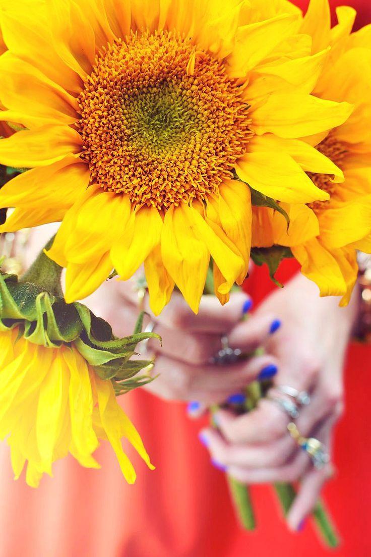 Tis the season for my favorite, Sunflowers!