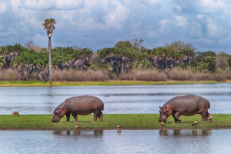 Happy biodiversity day, planet Earth – WWF – Medium