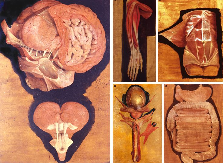 Медицинская анатомическая иллюстрация — история изучения тела человека в атласах 5 столетий. Часть 2 / Блог компании Visual Science / Хабрахабр