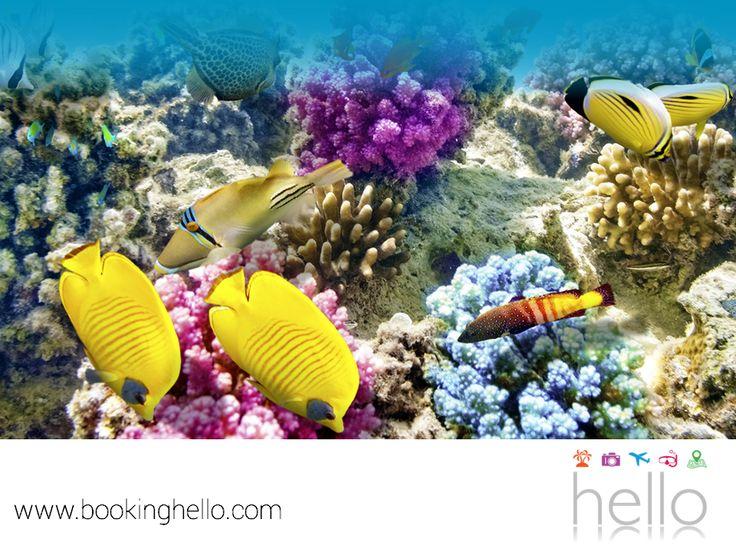 VIAJES PARA JUBILADOS TODO INCLUIDO AL CARIBE. En la profundidad de las aguas del Mar Caribe, se esconde una gran variedad de arrecifes y peces multicolor que podrás apreciar haciendo snorkeling. Una actividad que no requiere más que habilidades básicas de natación, para conocer más de las maravillas de este destino. En Booking Hello te recomendamos practicarlo, para disfrutar toda la belleza de este paraíso. #viajesparajubilados