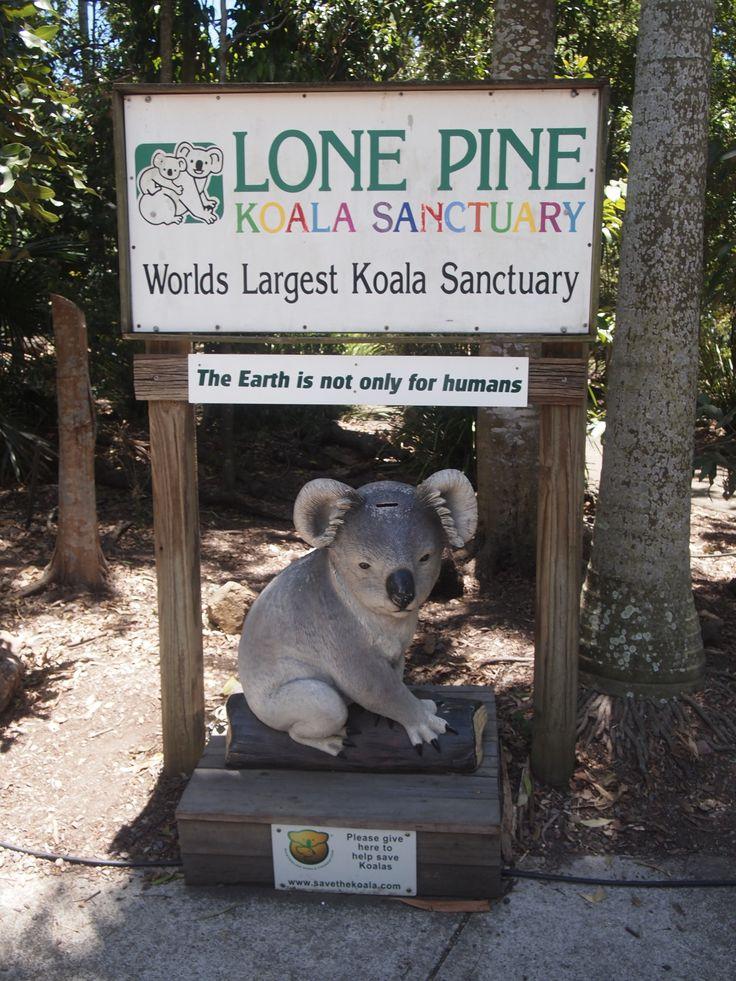 Lone Pine Koala Sanctuary, Australia... You can hold koalas, kangoroos, tasmanians, wombats , dingos..