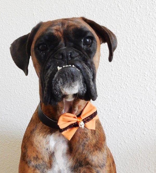 DIY : Collier d'Halloween pour chien (ou chat !)