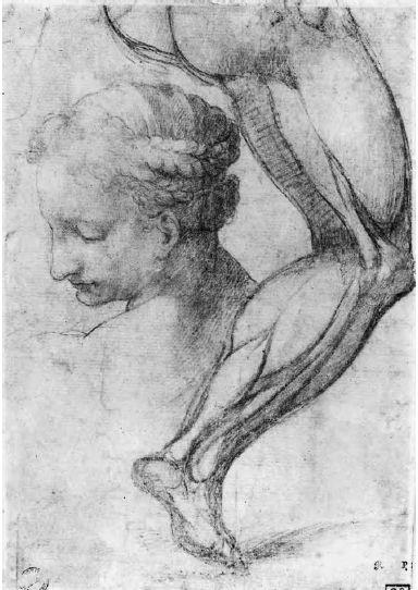 Michelangelo Buonarroti - La testa della Libica e lo studio di una gamba destra in vista laterale