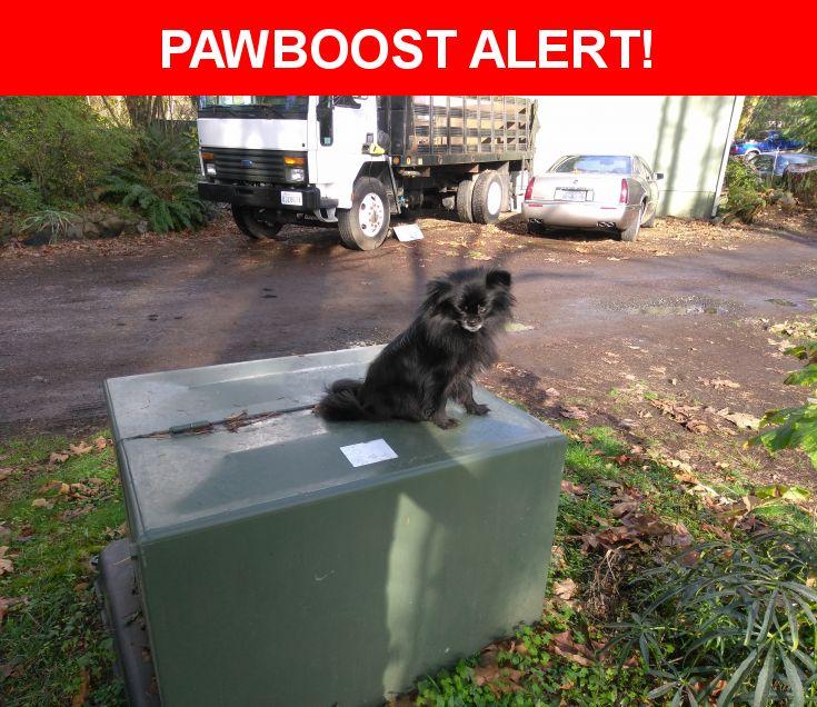 Please spread the word! Jetta was last seen in Battle Ground, WA 98604.  Description: Last seen 11/10/16  Nearest Address: 27118 Northeast Lewisville Highway, Battle Ground, WA, United States