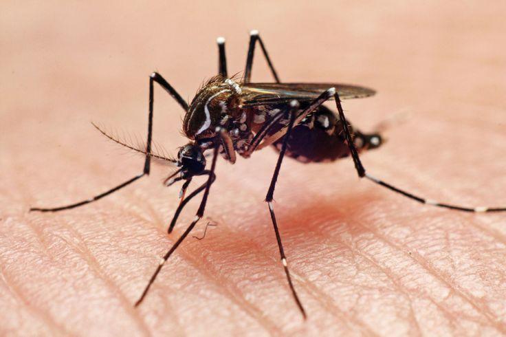 Jeuk muggenbeet verzachten? Deze middeltjes werken écht  -Cosmopolitan.nl