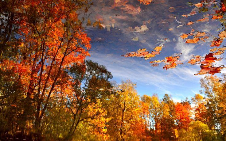 Jesień, Drzewa, Liście, Woda, Odbicie