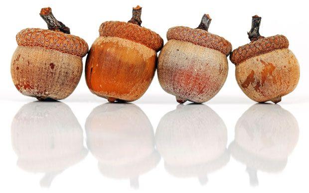 Le jambon de belotta, le cadeau gourmet par excellence, n'y pensez pas deux fois ✔ Choisissez le jambon de bellota. Acheter dans ecogourmetshop.fr