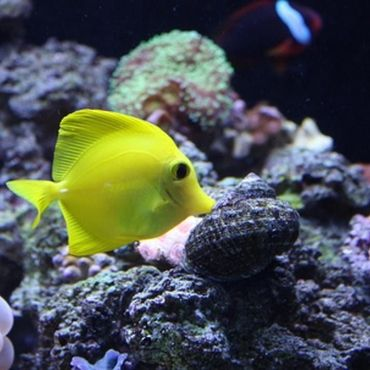 1000 ideas about saltwater fish tanks on pinterest