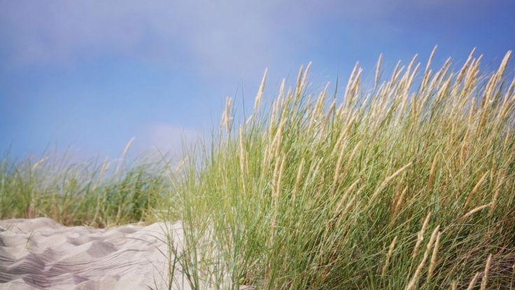 Coastal Sandy Dune and Grass Nature Background