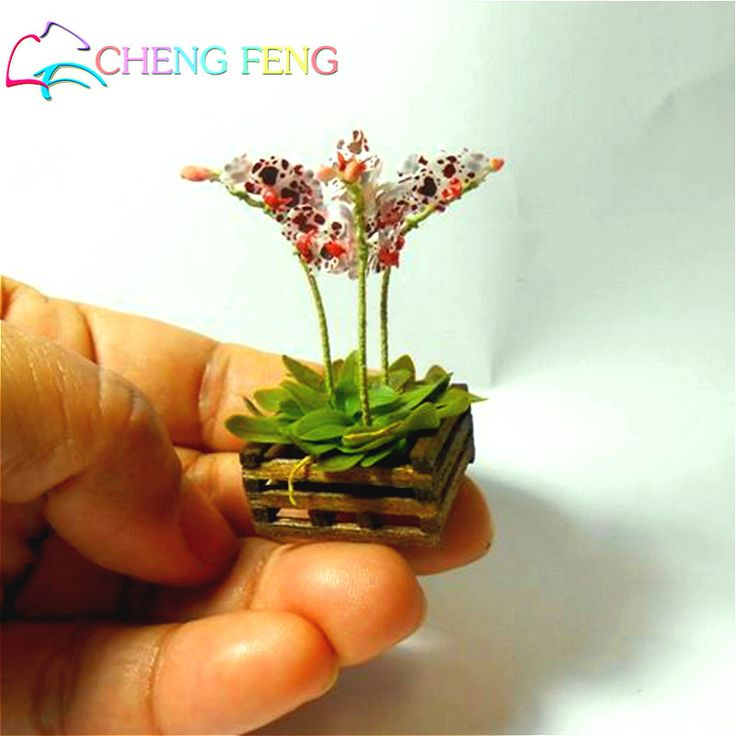 Find More Bonsai Information about 100 Pcs Seeds Mini Bonsai Orchid Seeds Indoor…