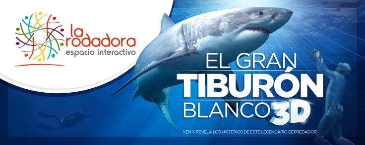 Gran tiburón blanco 3D - ¿Qué hacer en la ciudad?