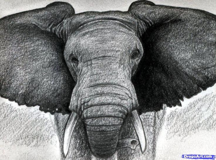 how to draw an elephant head, african elephant step 13