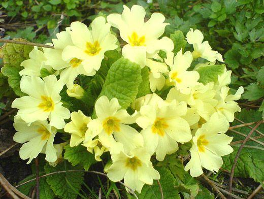 Съедобные травы и цветы: что можно класть в салат весной?
