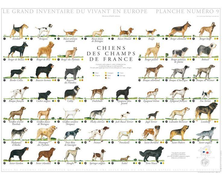 les 157 meilleures images du tableau animaux 4 pattes sur pinterest patte animaux et. Black Bedroom Furniture Sets. Home Design Ideas