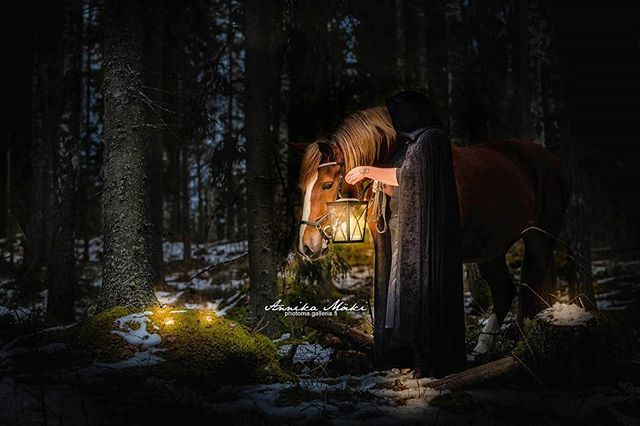 #equinephoto #equinephotography #equine #horsephotography #hevosvalokuvaus #photomahevoskuvagalleria #hevonen #horse #pony #poni #bestofequines #equinepictures #pferde #equinelove #equestrian #animalphotography #eläinkuvaus #cavallo #europaspferde #pferdeschoenheiten #featuremesophie #epb_post #jalustinnet #_eurepferdebilder_ #pferdepost_123 #horsephotog #boeunder3k #fantasy