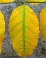 Problemas de 12 plantas: Árboles, Abeto, Morera, Ciprés, Pino, Tuya, Laurel, Jazmín, Dama de noche, Lantana, Yuca pie de elefante, Claveles, Césped.