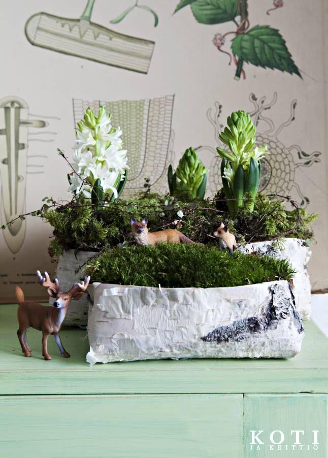 Asema pullollaan vinkeitä ideoita. Tuokkosiin saa kauniita asetelmia. Koti ja keittiö, kuva Kirsi-Marja Savola