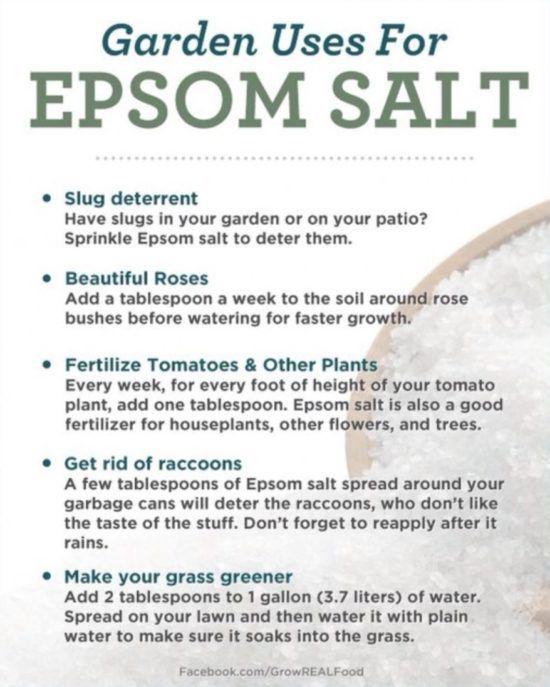 Epsom Salt For Gardening