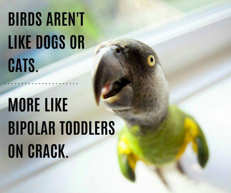 best 25 funny parrots ideas on pinterest african grey