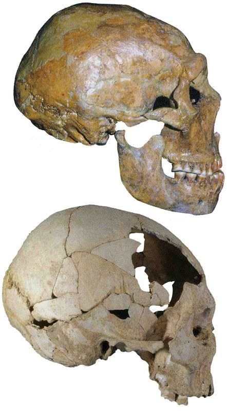 Carbon dating anthropology