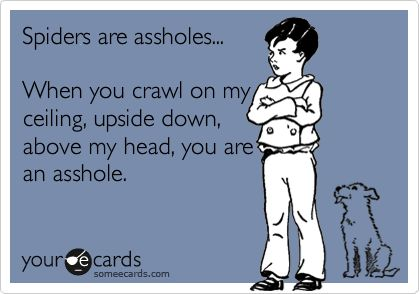 assholes....: Assholes Spiders, Absolutely, Accur, Ecards, Sour, Where, Damn Spiders, Hate Spiders, Stupid Spiders