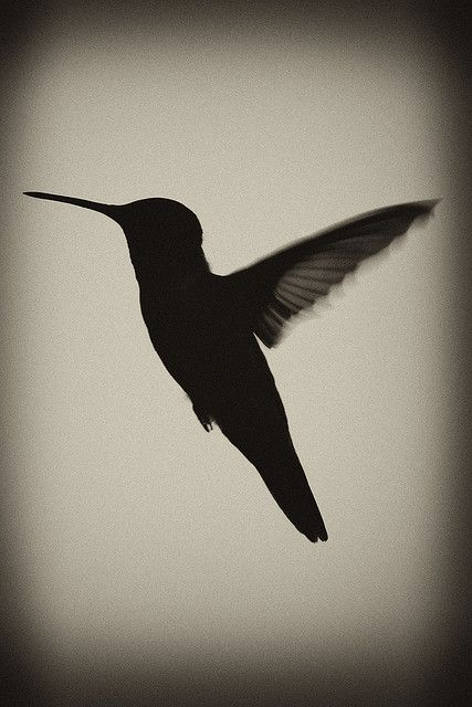 humming bird silhouette | Flickr - Photo Sharing!
