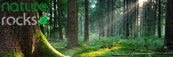 """NatureRocks.pl   Amerykański dziennikarz i badacz Richard Louv, autor książki """"Last Child in the Woods"""", stworzył pojęcie zespołu deficytu natury (nature deficit disorder). To zespół problemów rozwojowych u dzieci, których przyczyną jest… brak kontaktu z naturą!"""