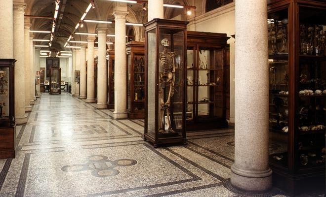 """Il Museo di Anatomia umana """"Luigi Rolando"""" dell'Università di Torino prima del restauro (ante 2003)"""