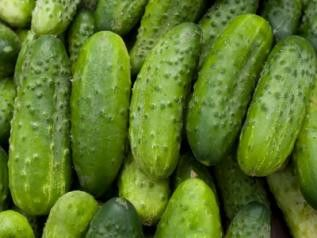 Home Made Pickles Pickling Cucumber - ORGANIC - Heirloom Vegetable - 1 | Seeds for Africa