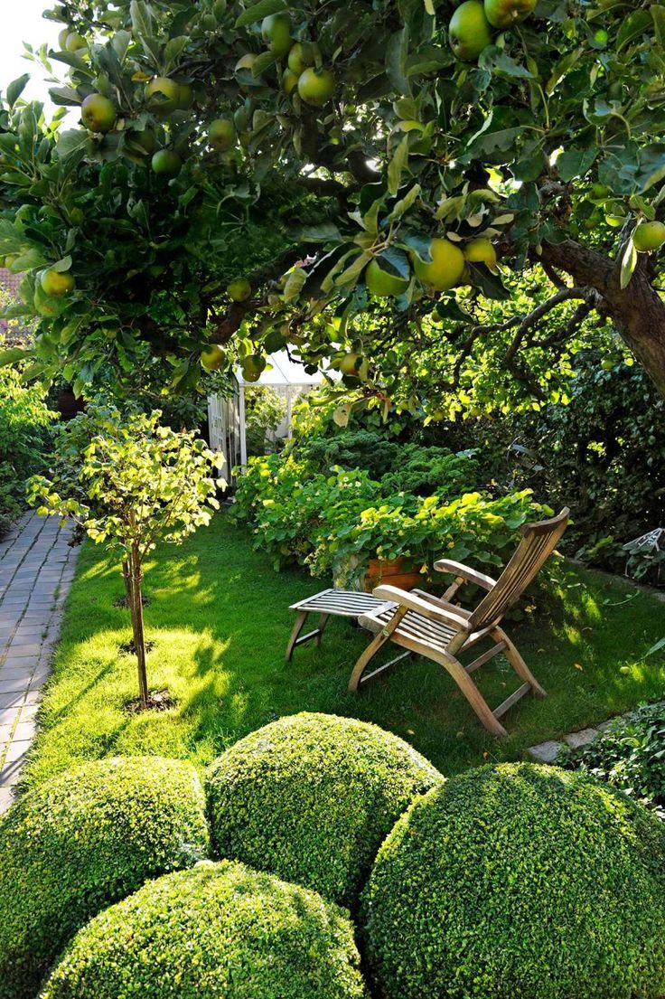 des buis en boule, pommier et du gazon dans le jardin contemporain