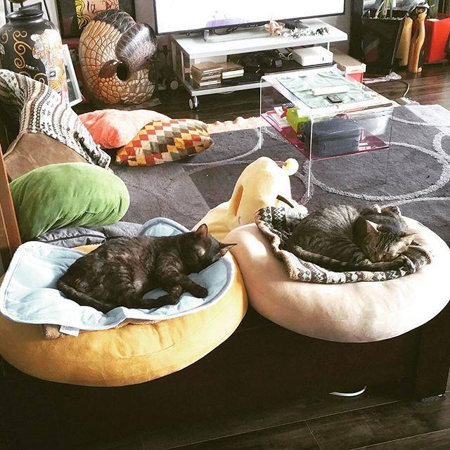 #favoritecat#lovecats#愛猫#ネコ#猫#ネコ部#猫クラブ#小鉄#小冬#コテツ#コフユ#東京#足立区#足立区扇#ニャンコ#cat#cats