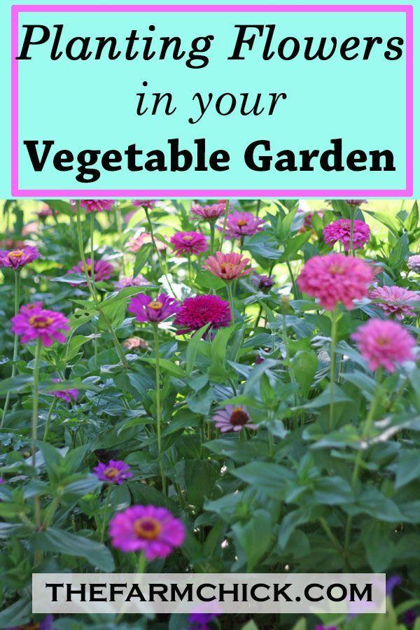 Planting Flowers In Your Vegetable Garden Vegetable Garden