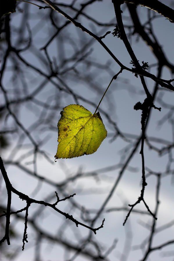 Image result for the last leaf pinterest