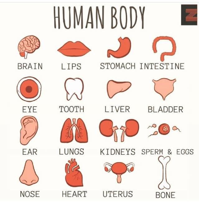 Forum | . | Fluent LandHuman Body Vocabulary | Fluent Land