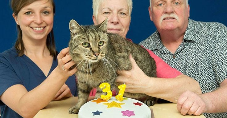Nutmeg es un adorable gatito que recientemente acaba de cumplir 31 años (31 años gatunos son 141 años humanos)  La pregunta aquí es: ¿Cuántas vidas tendrá?