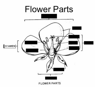Parts of a Flowering Plant - Quizlet flashcards. | Biology ...