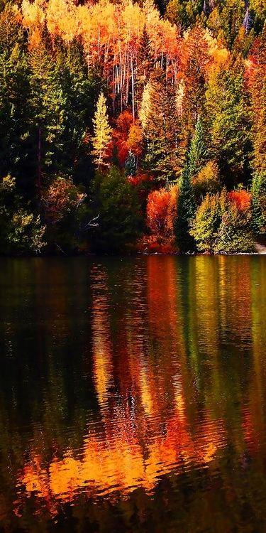 Outono Esplendido