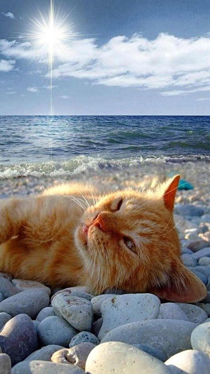 С добрым утром на море картинки прикольные смешные, мамочка