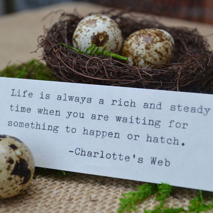 Little Birds Nest Message in a Bottle with Charlotte's Web Quote. $19.00, via Etsy.