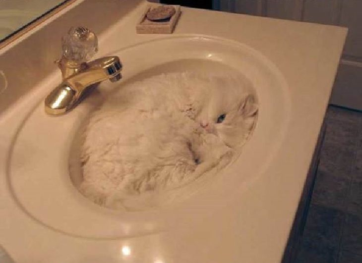 18 Fotos de Gatos que dormem em qualquer lugar