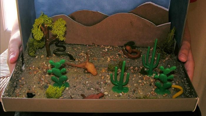 25 best ideas about desert biome on pinterest desert for West out of best project