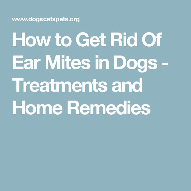 How to Get Rid Of Ear Mites in Dogs - Treatments and Home Remedies