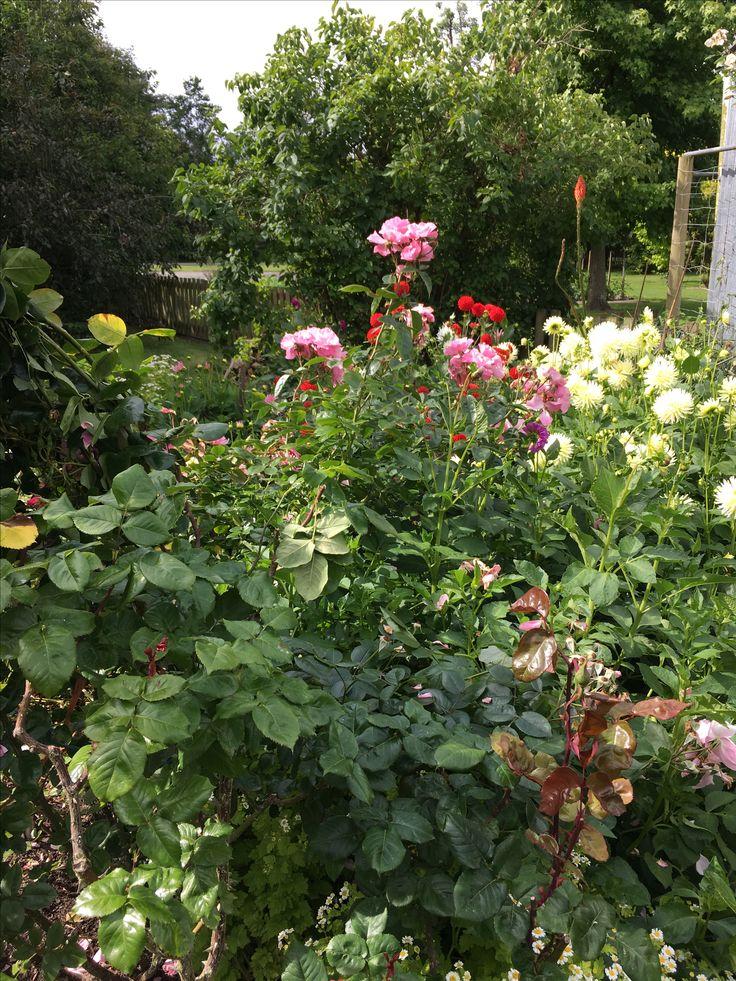 Christchurch gardens