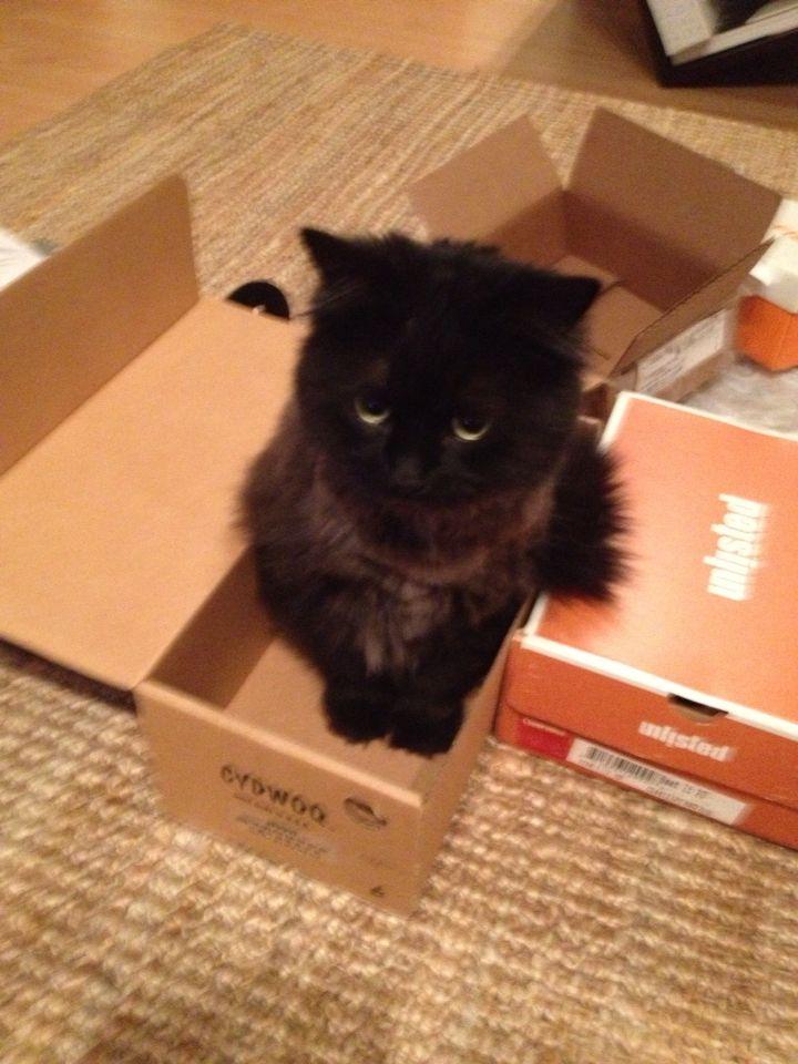 Georgie in a box 2