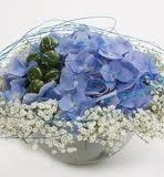 blå blomster - Google-søk