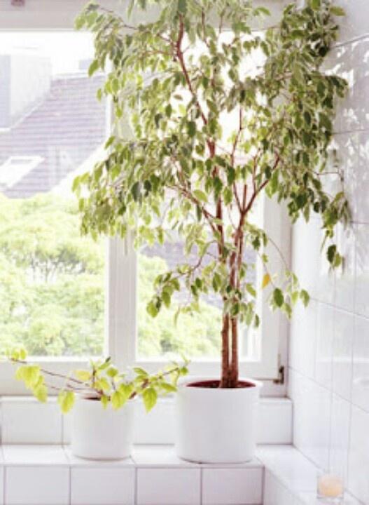 48 best Bespoke artificial Trees images on Pinterest   Indoor ...