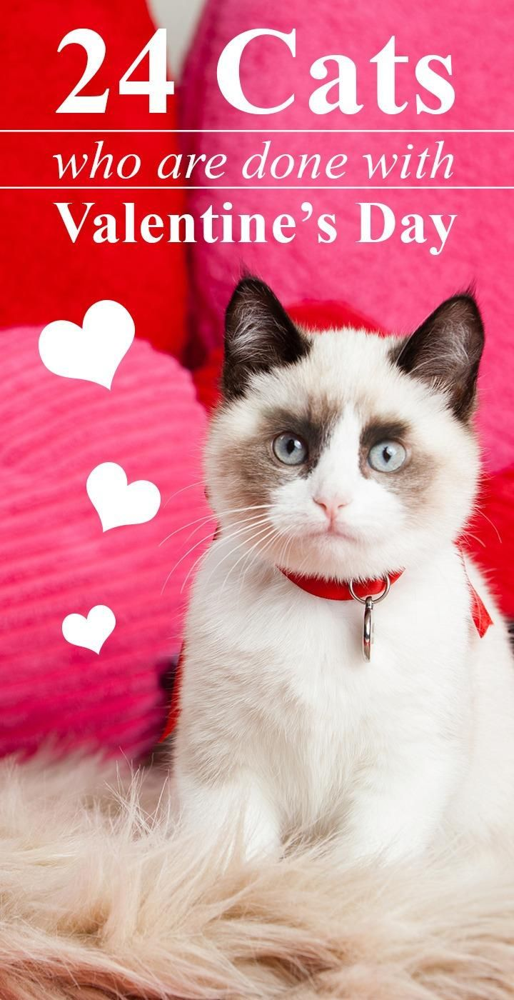 24 Cats That Are Tired Of Being Your Valentines Day Date