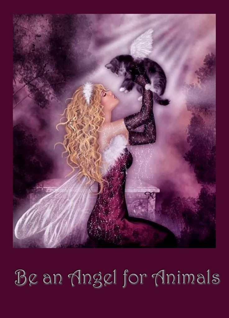 336 best Angels images on Pinterest | Angels, Angel and Angel wing ...