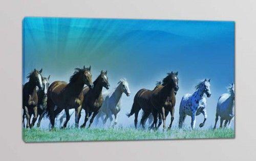 quadro moderno cavalli